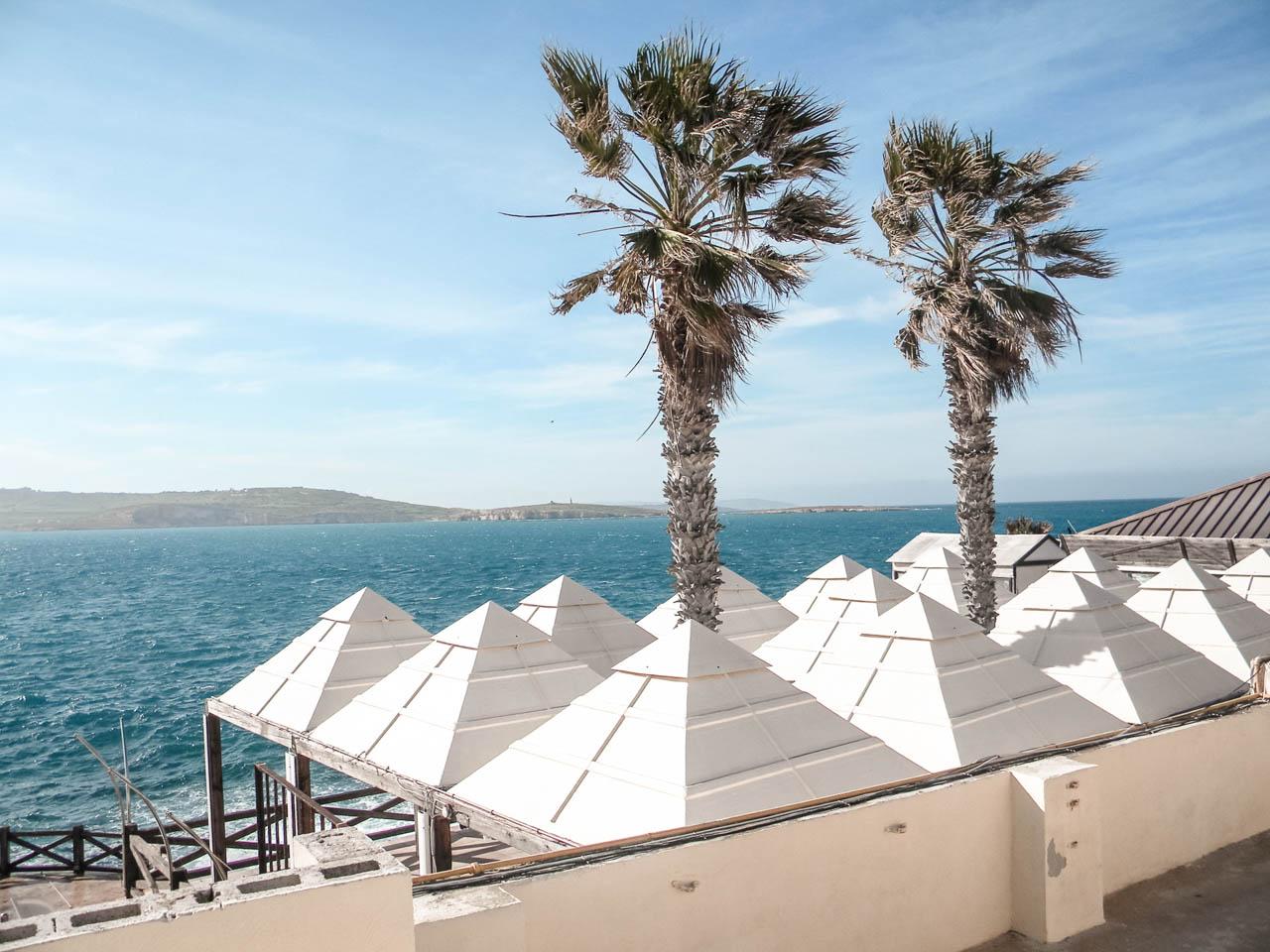 Palm trees on a beach in Bugibba, Malta