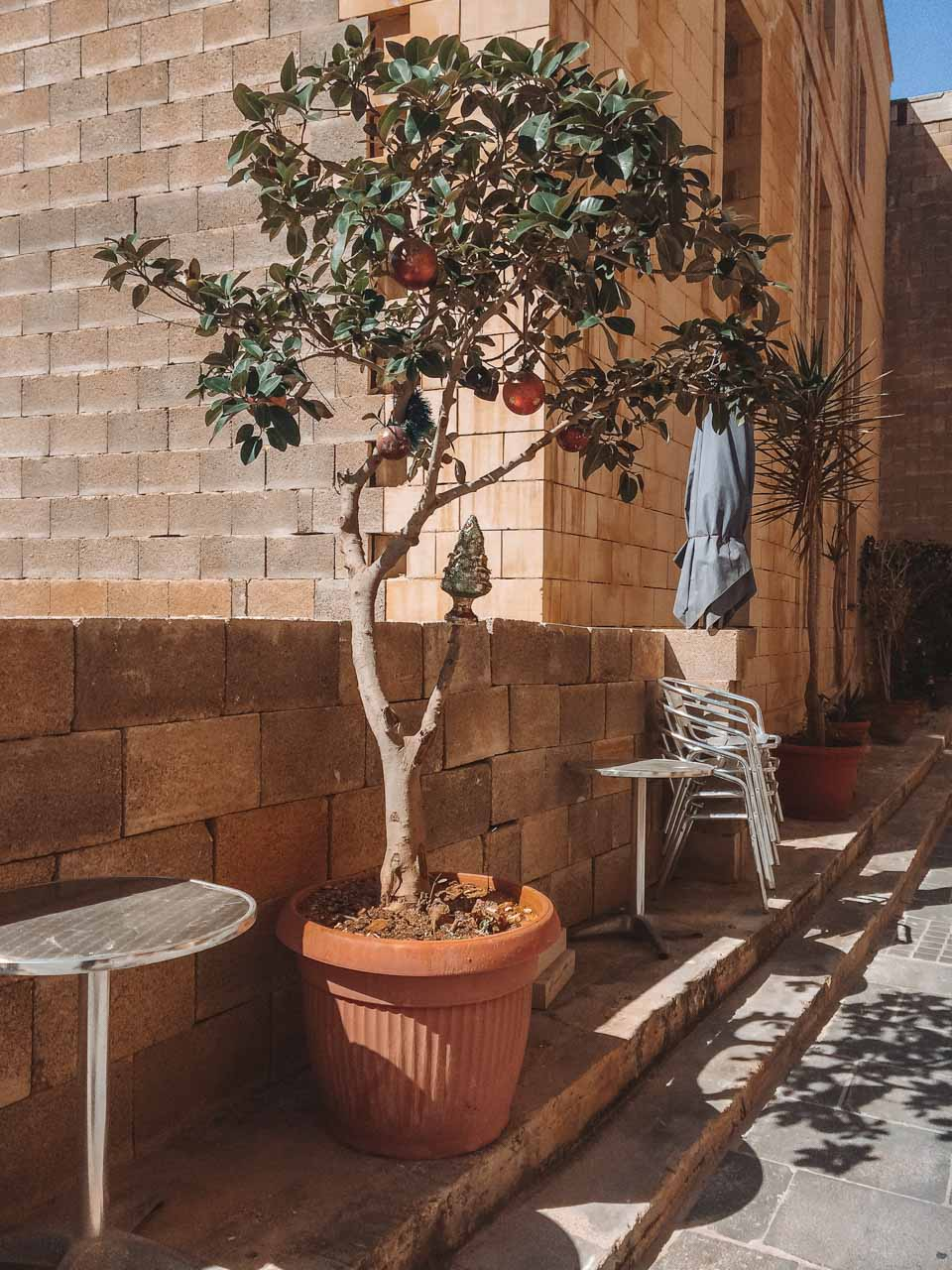A pomegranate tree planted next to a house in Birgu, Malta