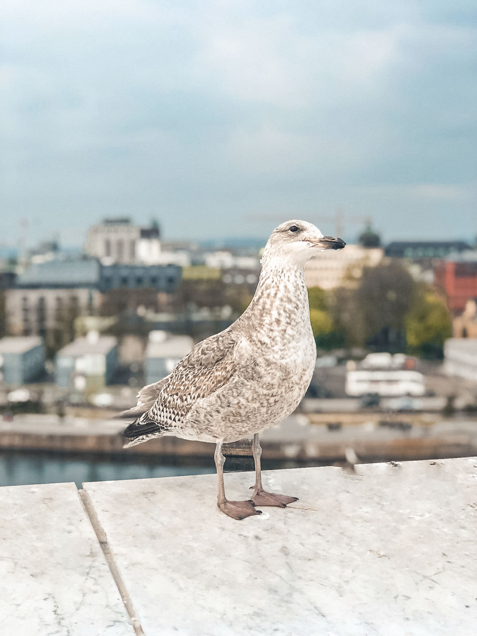 A seagull sitting on the ledge of The Norwegian National Opera & Ballet in Oslo, Norway