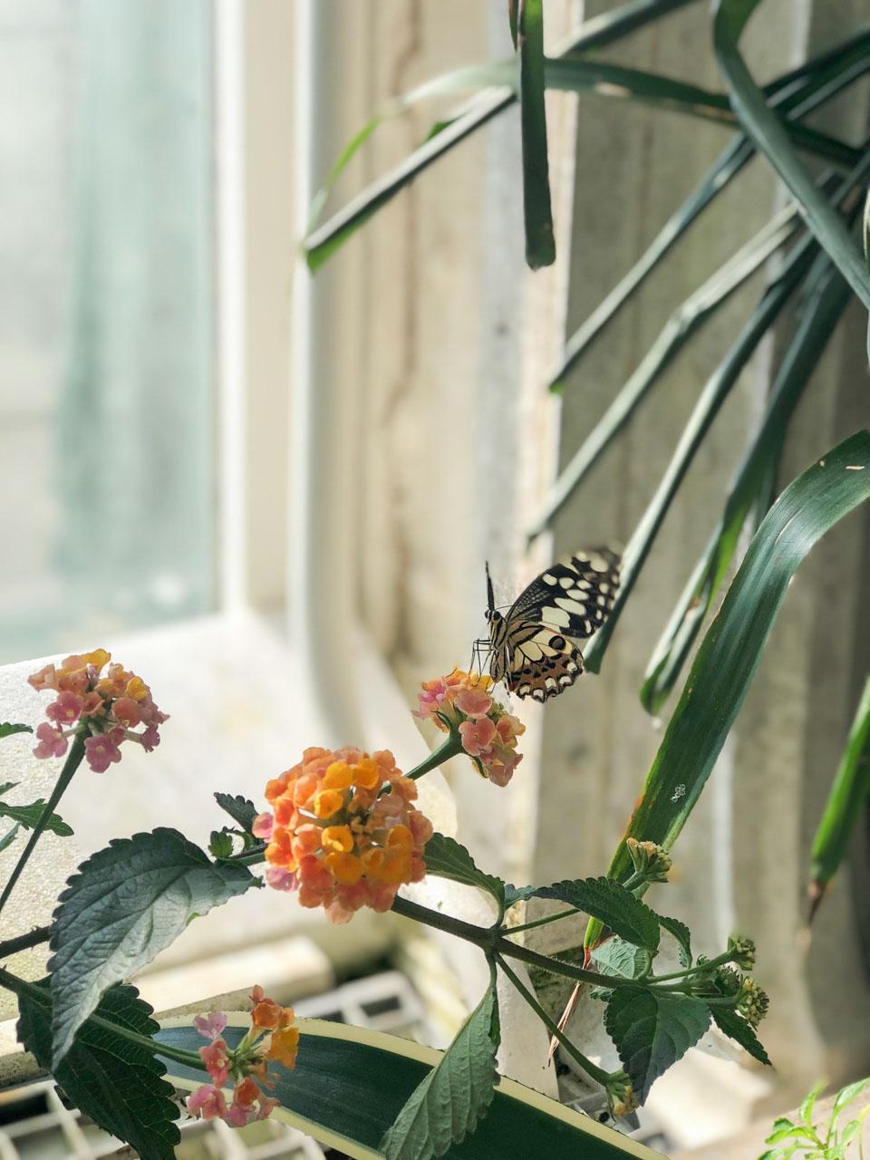 A butterfly at Schmetterlinghaus in Vienna, Austria